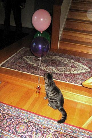 cat-ballon